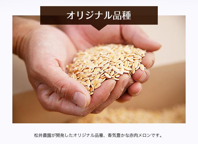 【オリジナル品種】松井農園が開発したオリジナル品種、香気豊かな赤肉メロンです。