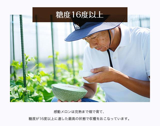 【糖度16度以上】感動メロンは完熟まで畑で育て、糖度が16度以上に達した最高の状態で収穫をおこなっています。