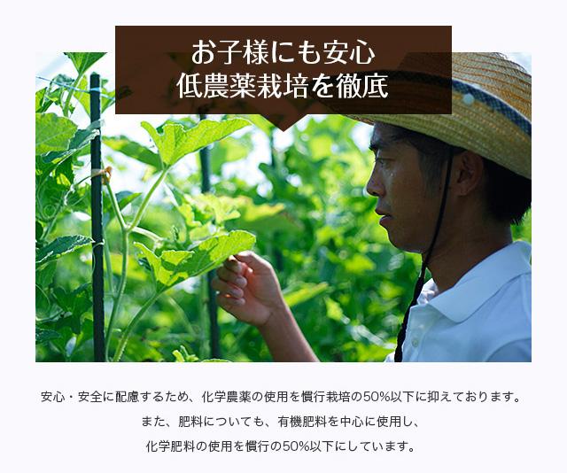【お子様にも安心 低農薬栽培を徹底】安心・安全に配慮するため、化学農薬の使用を慣行栽培の50%以下に抑えております。また、肥料についても、有機肥料を中心に使用し、化学肥料の使用を慣行の50%以下にしています。