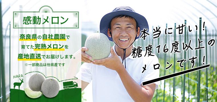 奈良県の自社農園で育てた完熟メロンを産地直送でお届けします。